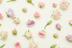 Festive floral decor pink roses ivory background stock photography