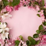 Festive flower apple tree composition border on the pastel pink background. Overhead view.  Royalty Free Stock Photography