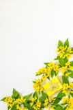 Festive flower arrangement on white background. Festive flower arrangement. Flowers loosestrife lysimachia and gift in yellow packing on white textured Stock Photography