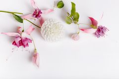Festive flower composition on the white wooden background. Overhead view. Festive flower white dahlias, pink fuchsia composition on the white background stock images