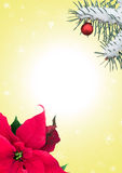 Festive frame with poinsettia and fir branch Royalty Free Stock Photo