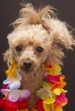 Festive Furry Friend Stock Image