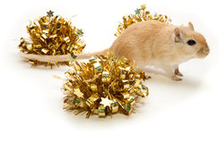 Festive gerbil Royalty Free Stock Image
