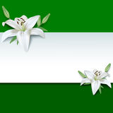 Festive greeting or invitation card, 3d flower lily. Festive rectangular frame with white summer 3d flowers lilies. Floral creative trendy green background Stock Photography