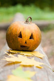 Festive Halloween pumpkin and maple leaf royalty free stock images