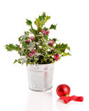 Festive Holly Stock Photography