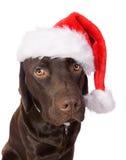 Festive Labrador Stock Images