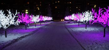 Festive LED lights on the branches of trees in the winter night city royalty free stock photo