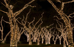 Festive Lights on Trees. Tree branches and trunks wrapped in festive lights Royalty Free Stock Photos