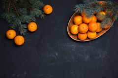 Festive new year composition with tangerines. Pine cones greens christmas tree Royalty Free Stock Images