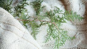 Free Festive New Year Winter Warm Knit Texture Juniper Stock Photography - 127283012