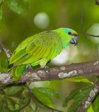 Festive Parrot Stock Image