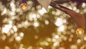 Festive party light bulbs hanging with green tree background cop royalty free stock images