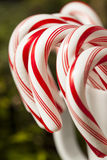 Festive Peppermint Candy Canes Royalty Free Stock Images