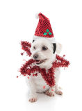 Festive pooch Royalty Free Stock Photos