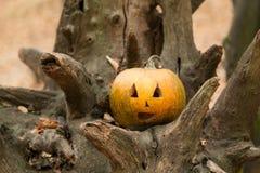 Festive pumpkins for Halloween is on a log Stock Photos