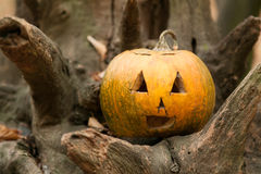 Festive pumpkins for Halloween is on a log Royalty Free Stock Image