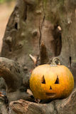 Festive pumpkins for Halloween is on a log Stock Photography