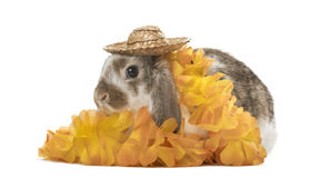 Festive rabbit with hat and flowers, isolated Stock Images