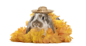 Festive rabbit with hat and flowers, isolated Royalty Free Stock Image