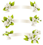 Festive satin ribbon garland flag with cherry flowers  o. N white background Royalty Free Stock Images