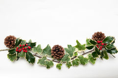 Festive sprig of holly and ivy leaves with berries isolated on a Royalty Free Stock Photography