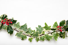 Festive sprig of holly and ivy leaves with berries isolated on a Royalty Free Stock Photos
