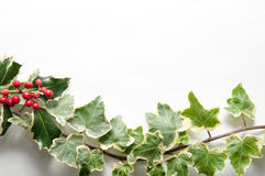 Festive sprig of holly and ivy leaves with berries isolated on a Stock Images