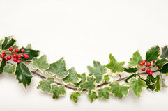 Festive sprig of holly and ivy leaves with berries isolated on a Royalty Free Stock Photo