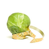 Festive Sprout stock photos
