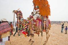 Festively dekorerad kamel och hans lyckliga ägare Arkivbild