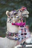 Festively kleedde omhoog portret van een kameel stock foto