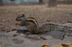 Festività del ` s dello scoiattolo immagine stock libera da diritti