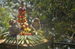 Festività della scimmia Immagine Stock Libera da Diritti