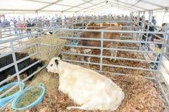 Festività rurale in Agno sulla Svizzera Immagine Stock