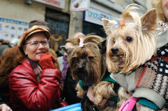 Festività di St.ANTON. Madrid.SPAIN Immagine Stock Libera da Diritti