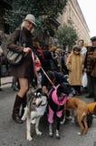 Festività di St.ANTON. Madrid.SPAIN Fotografia Stock Libera da Diritti