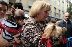 Festivity of St.ANTON . Madrid.SPAIN Stock Photos
