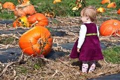 festiwal Halloween obrazy royalty free