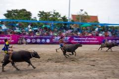 Festiwalu bizonu ścigać się Zdjęcia Royalty Free