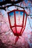 festiwalu Japan lampion Sakura obrazy stock