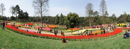 festiwalu jeziorny poli- shixiang turystyki tulipan Obrazy Stock