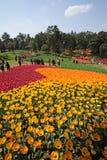 festiwalu jeziorny poli- shixiang turystyki tulipan Zdjęcie Royalty Free