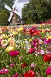 festiwalu tulipan fotografia stock