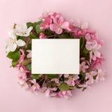 Festliche BlumenApfelbaumzusammensetzung und weiße Karte mit Kopienraum auf dem Pastellrosahintergrund Obenliegende Ansicht Stockbild