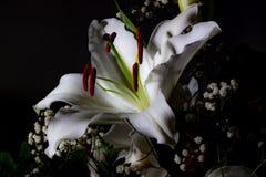 Festlicher Blumenstrauß von Lilien in den roten und weißen Farben stockbilder