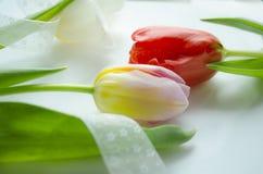 Festlig ljus sammansättning med den härliga färgrika tulpan för att skapa feriekort, inbjudningar, reklamblad, affischer eller an Arkivfoton