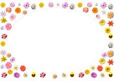 Festlig ram av färgrika blommor Royaltyfria Bilder