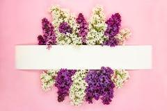 Festligt inbjudan- eller hälsningkort med den härliga blom- gränsen Violetta och vita syringablommor på ljust - rosa bakgrund kop royaltyfri bild