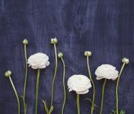 Festligt inbjudankort med härliga blommor Royaltyfri Foto